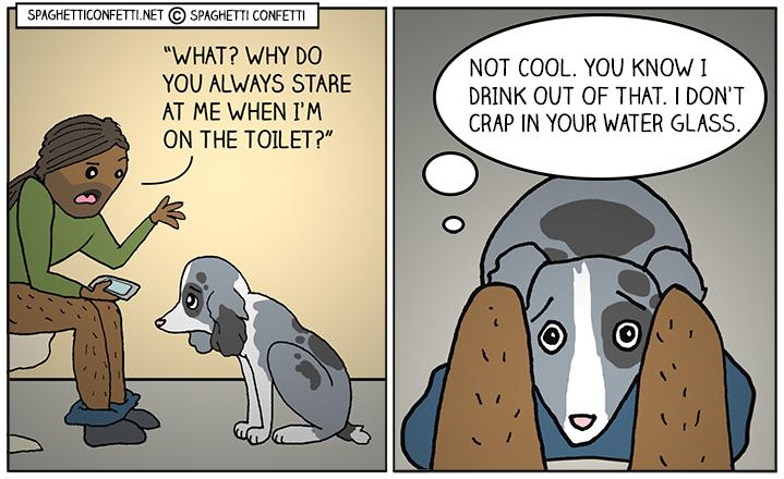 bathroom dog_110