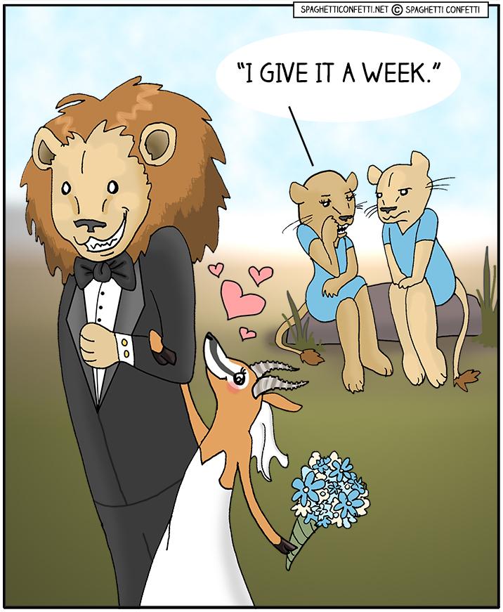 lion gazelle marriage_110