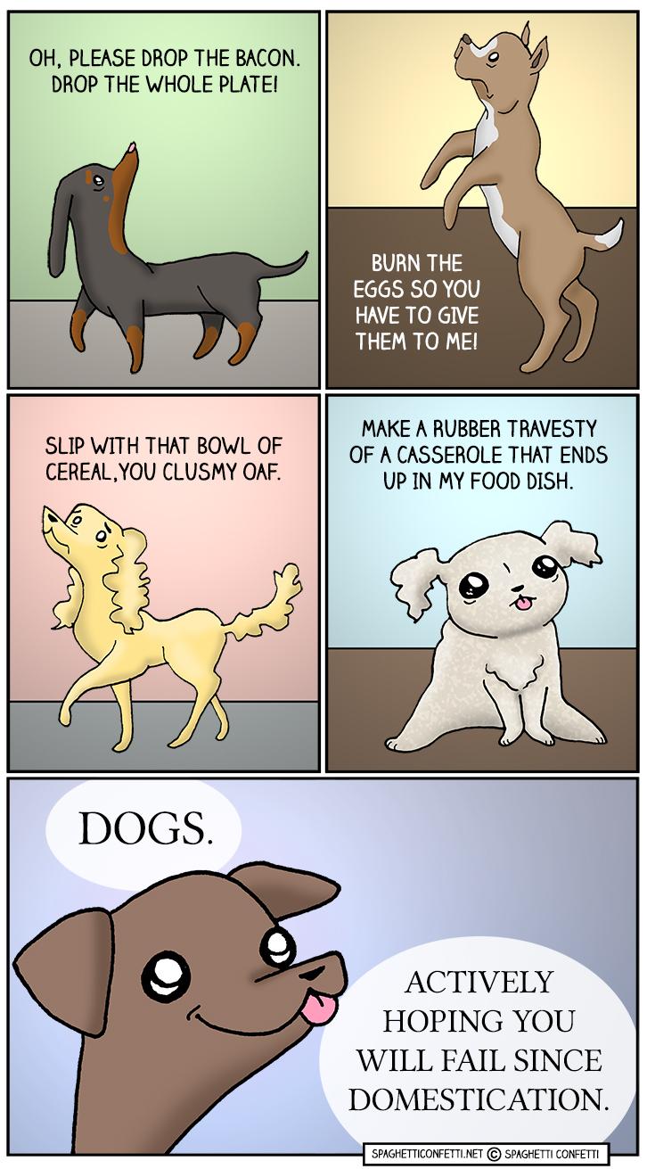 dog begging_110